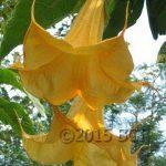 Dolas Sun Garden
