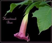 Hurstwood Bow