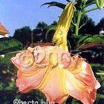 gallery_2614_1301_76483