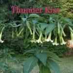 Thunder Kiss