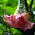 SB Tutu Galette Rose