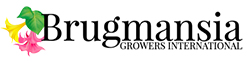 Brugmansia Growers International