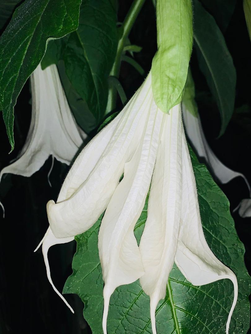 Splitted flower